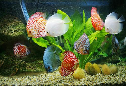 Đặt bể cá đúng phong thủy trong phòng khách và nhà ở